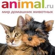 Animal.ru - Всё самое интересное и полезное о домашних питомцах! группа в Моем Мире.