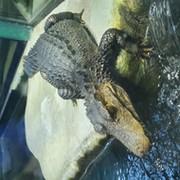 Аня Тарасова on My World.
