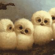 naira barsamyan on My World.