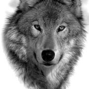 Wolf 1839 on My World.